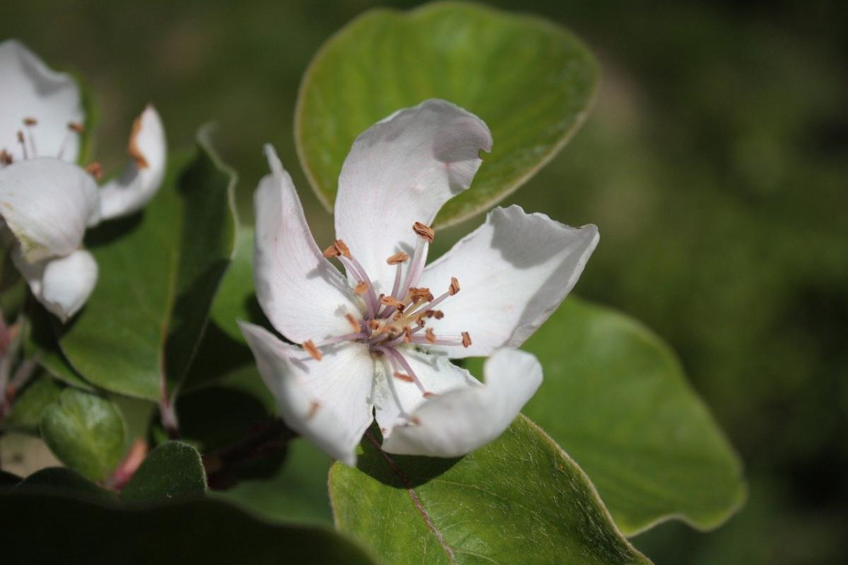 Białe kwiaty kwitnące w maju. - Co kwitnie w maju?