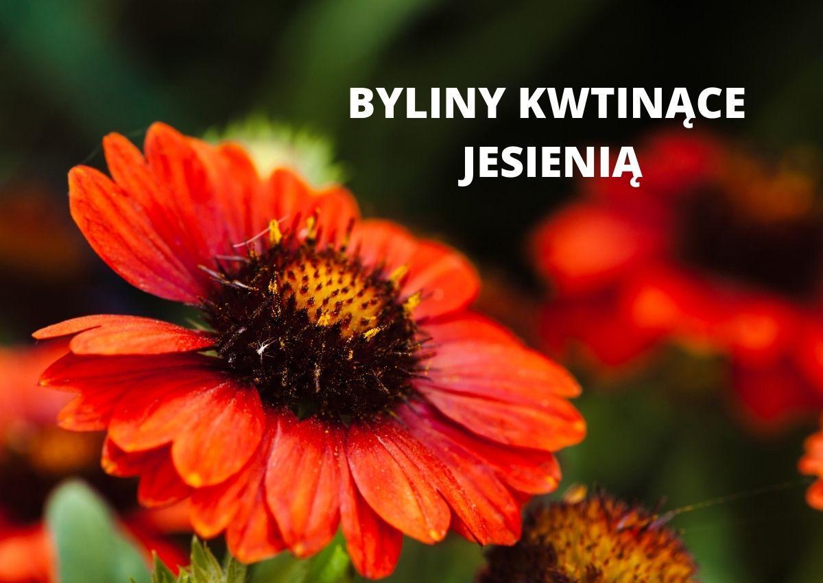 Byliny kwitnące jesienią - Jakie byliny kwitną jesienią?