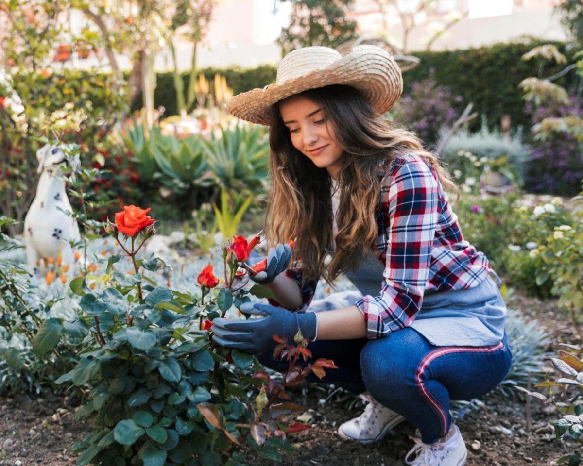 Czy można sadzić róże w czerwcu?