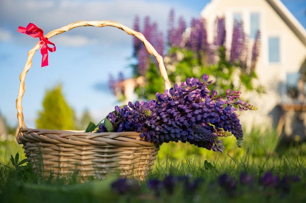 Fioletowe kwiaty w maju - Jakie kwiaty sadzimy w maju?