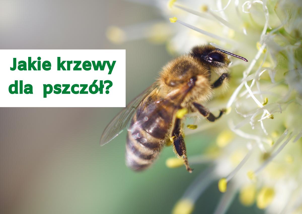 Jakie krzewy dla pszczół w ogrodzie?