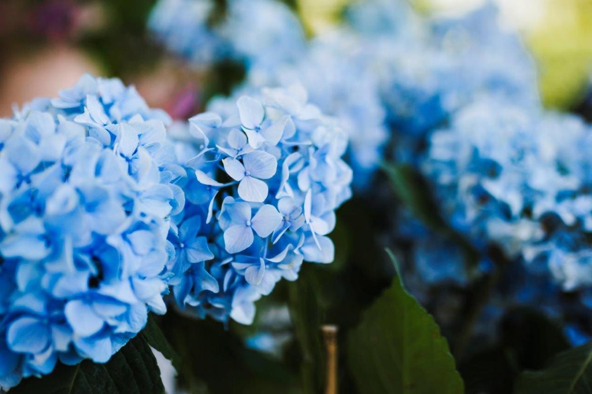 Jakie kwiaty do ogrodu w czerwcu?