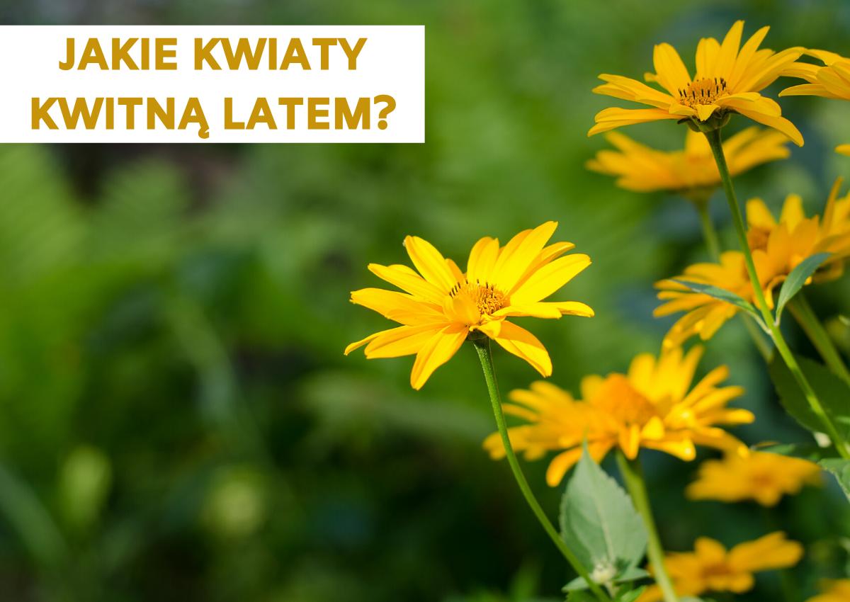 Jakie kwiaty kwitną latem? Kwiaty kwitnące latem.