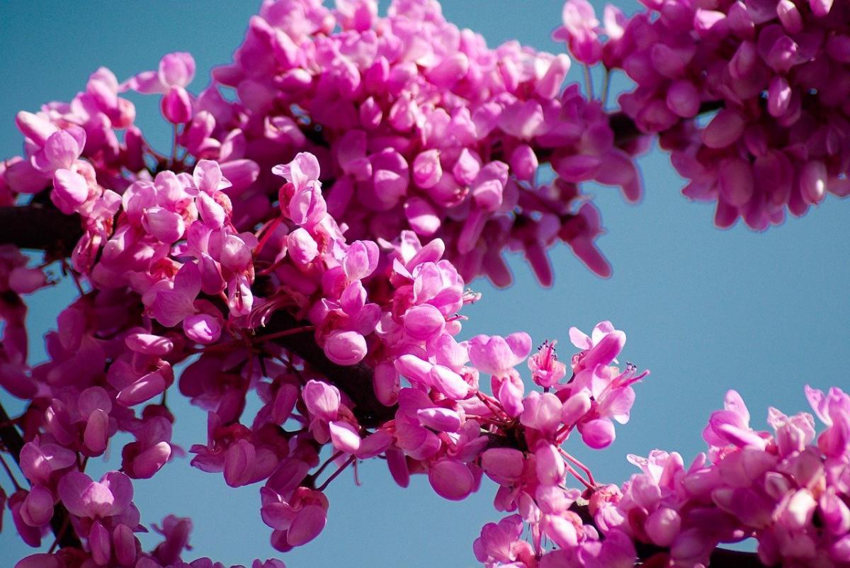 Krzewy ozdobne do ogrodu kwitnące wieloletnie