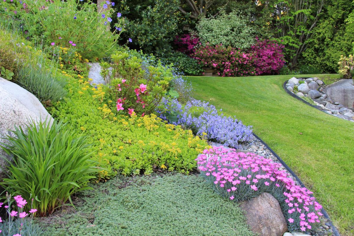 Kwiaty do ogrodu wieloletnie długo kwitnące