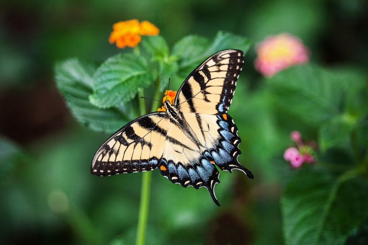 Kwiaty i rośliny uwielbiane przez motyle - Kwiaty wabiące motyle