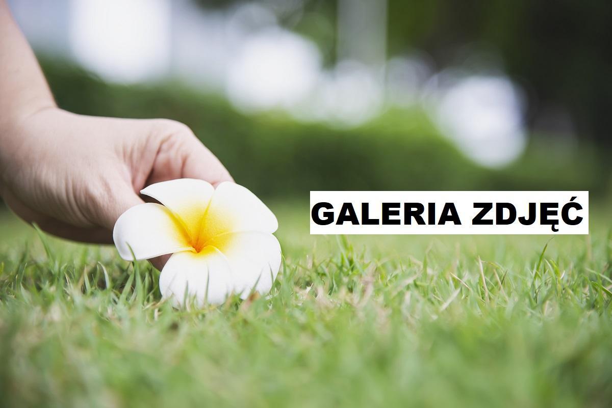 Mały ogród przy szeregowcu - Jak go urządzić?