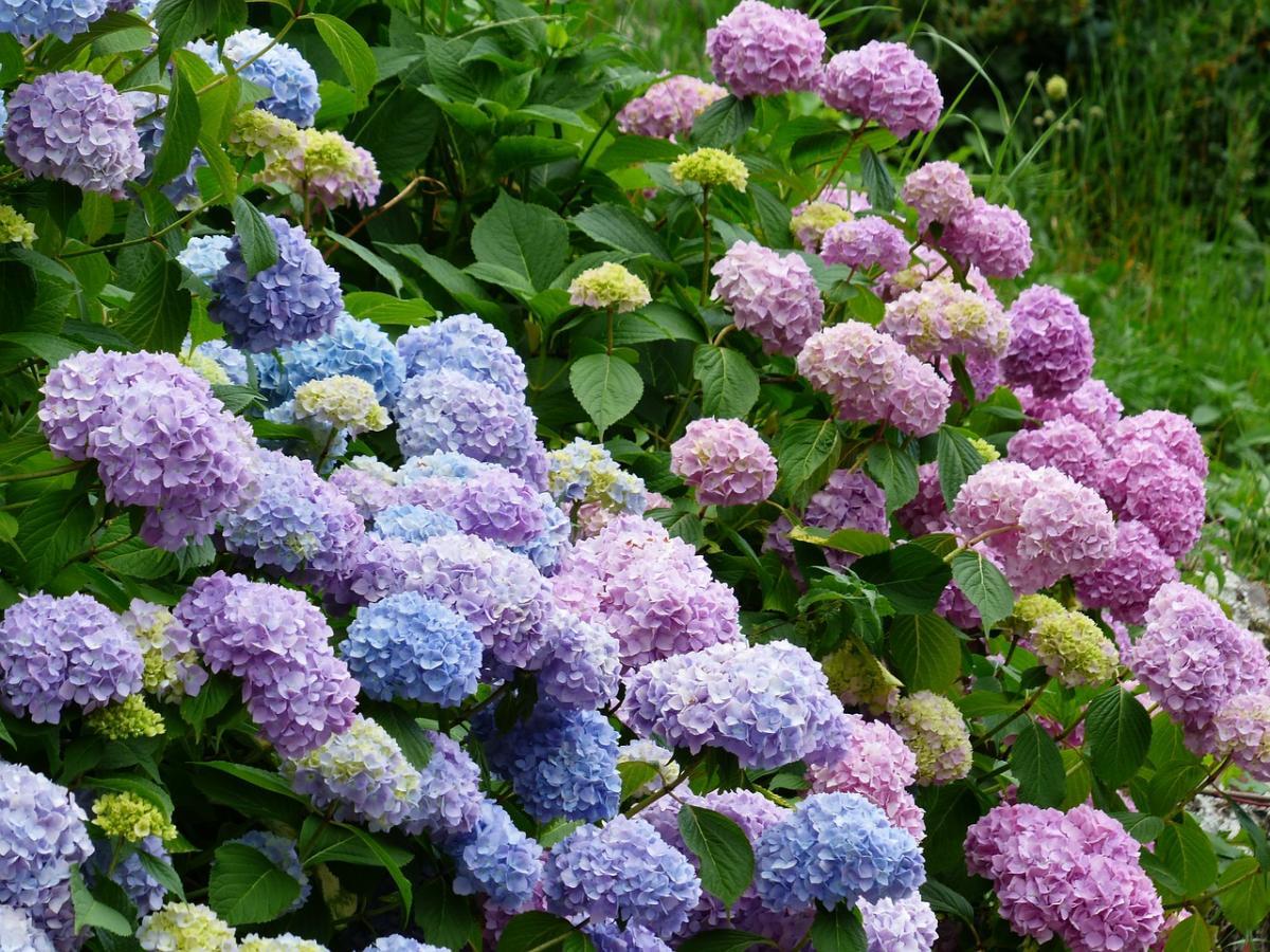 Najpiękniejsze krzewy do ogrodu - Krzewy kwitnące do ogrodu
