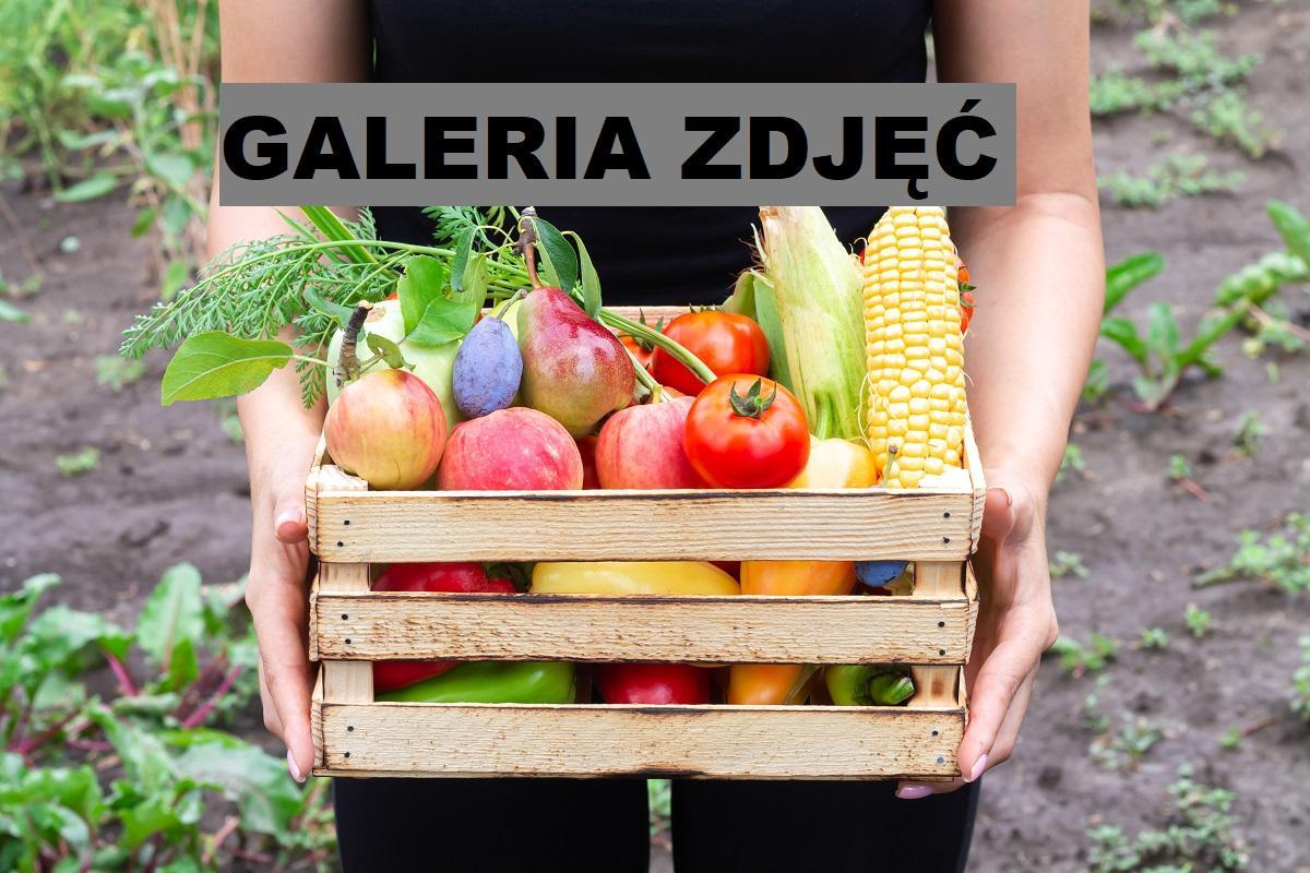 Skrzynki na warzywa do ogrodu – galeria zdjęć propozycji